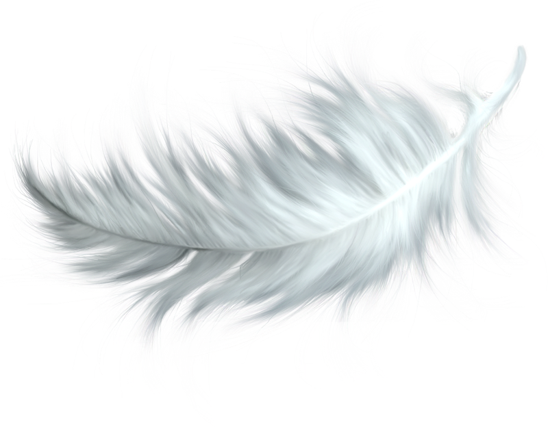 Portfolio drawing feather. Png images free download