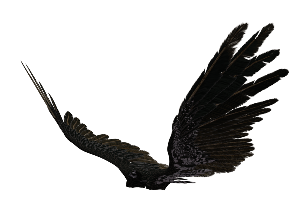 Black angel wings png. Transparent pictures free icons