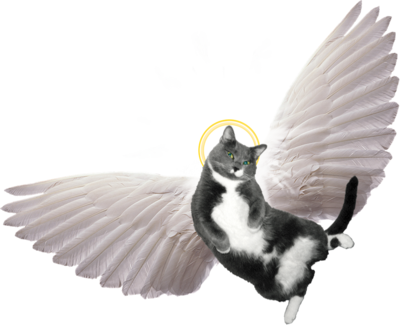 Angel wings for cats png. Image cat clip art