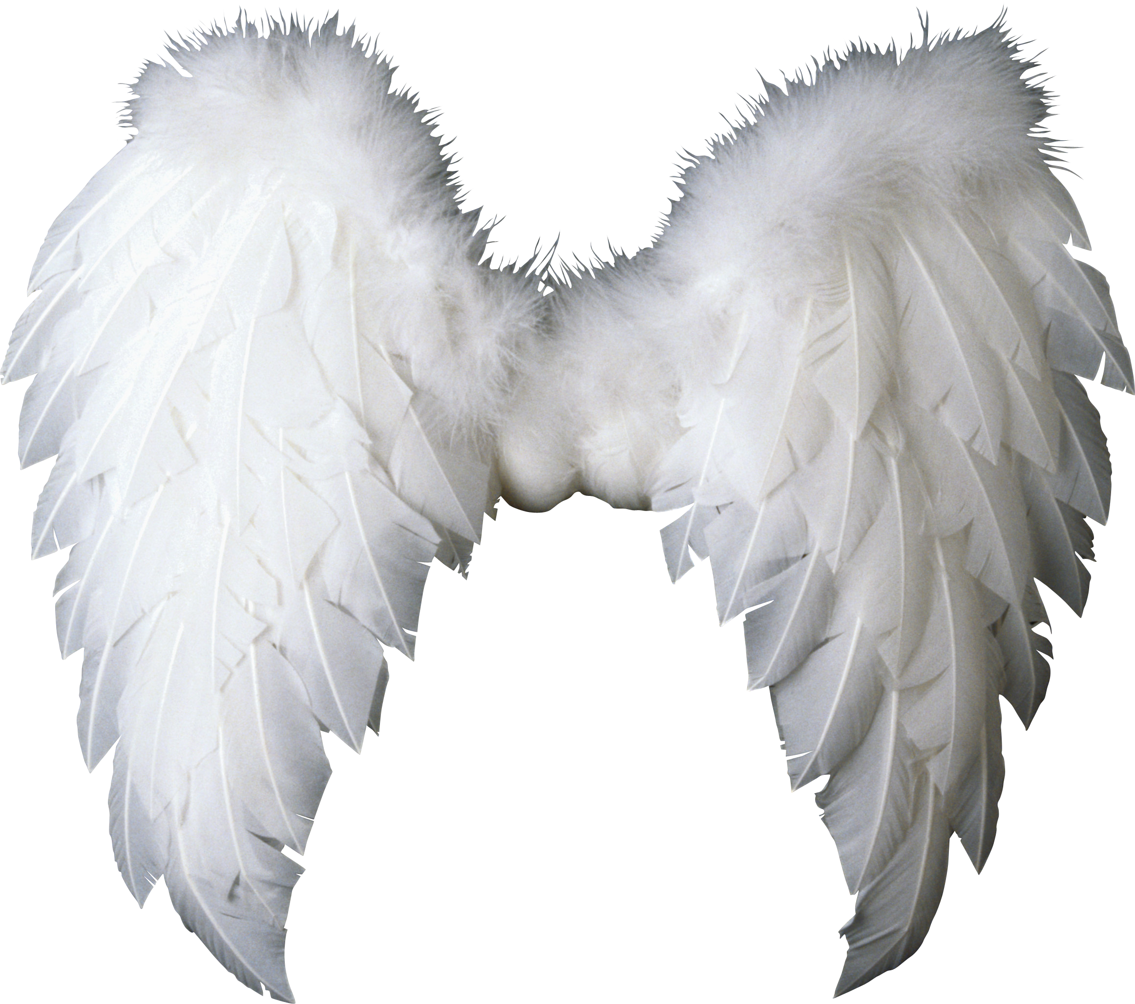 Angel wings .png. White transparent transparentpng