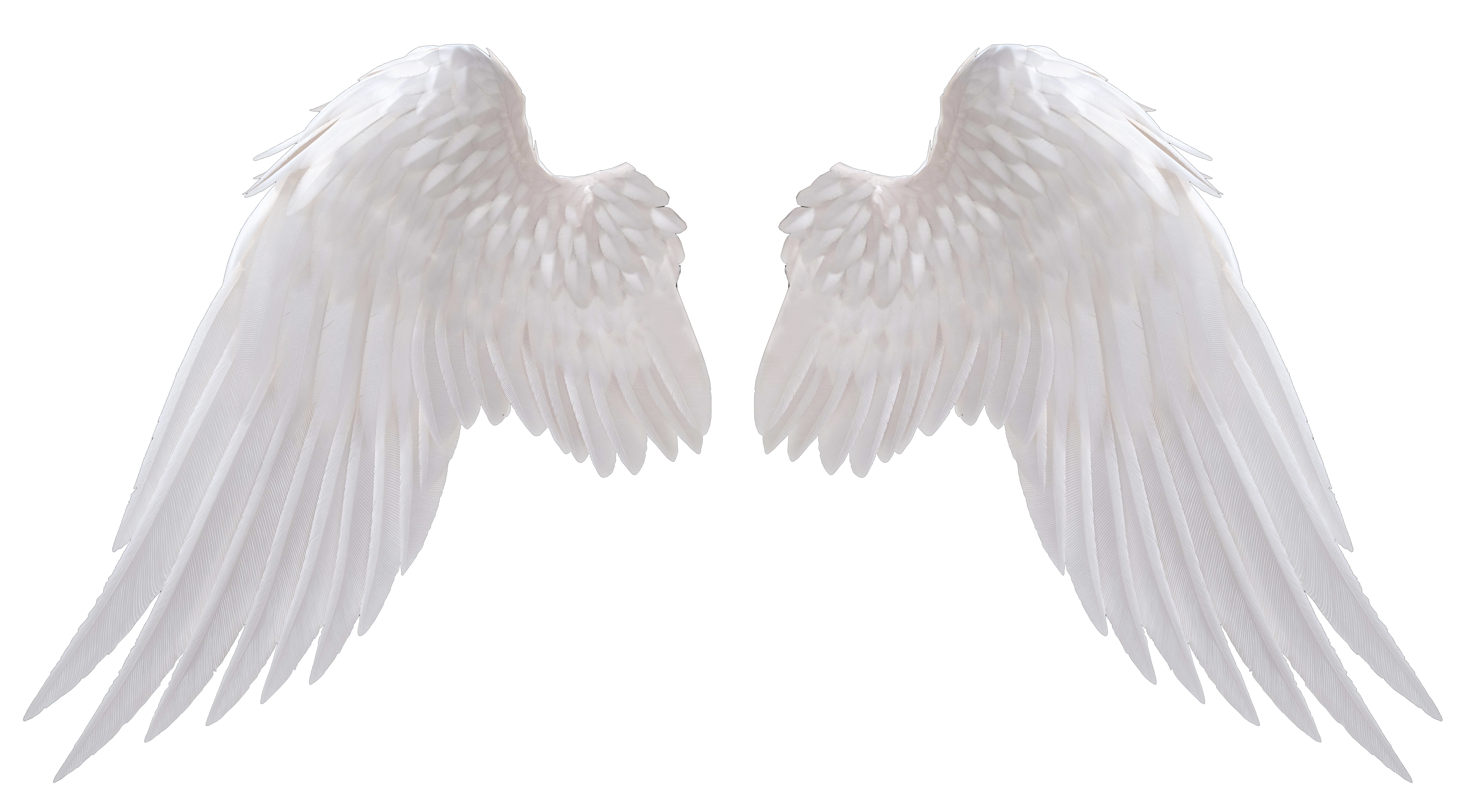 Angel wings png. Angels pinterest and