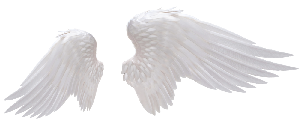 Angel wings .png. White png photo arts