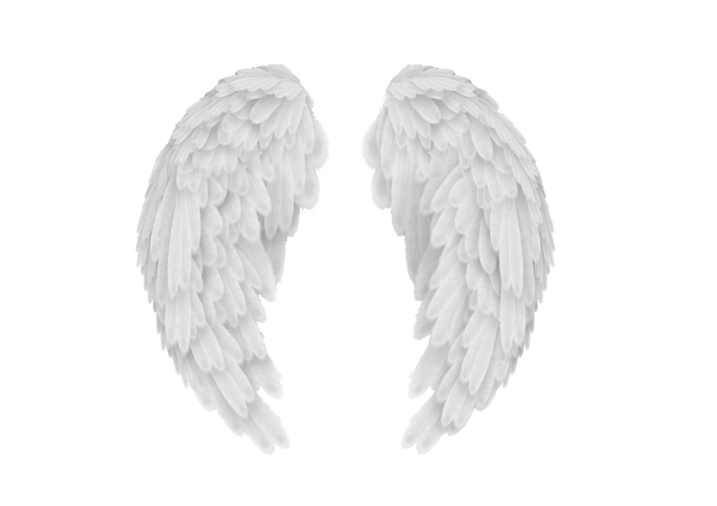 Angel wings png transparent. White image peoplepng com