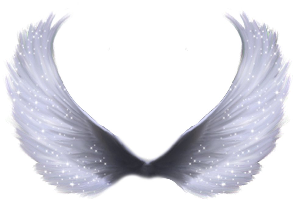 Angel wings png transparent. Download hd full by
