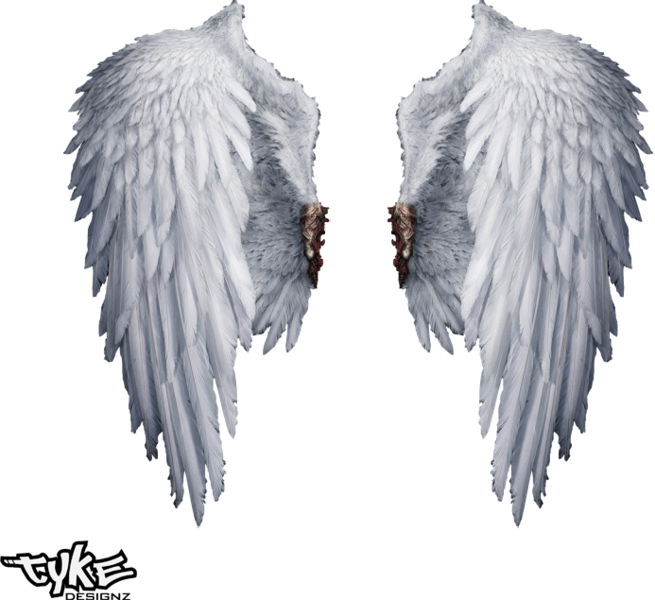 Angel wings png transparent. Hq psd official psds