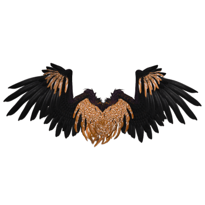 Eagle feathers png. Black angel wings transparent