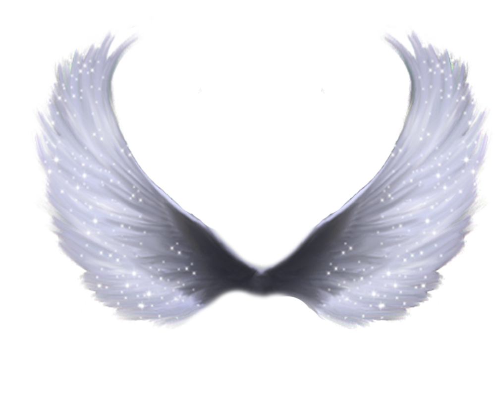 Angel wings png transparent. Image arts