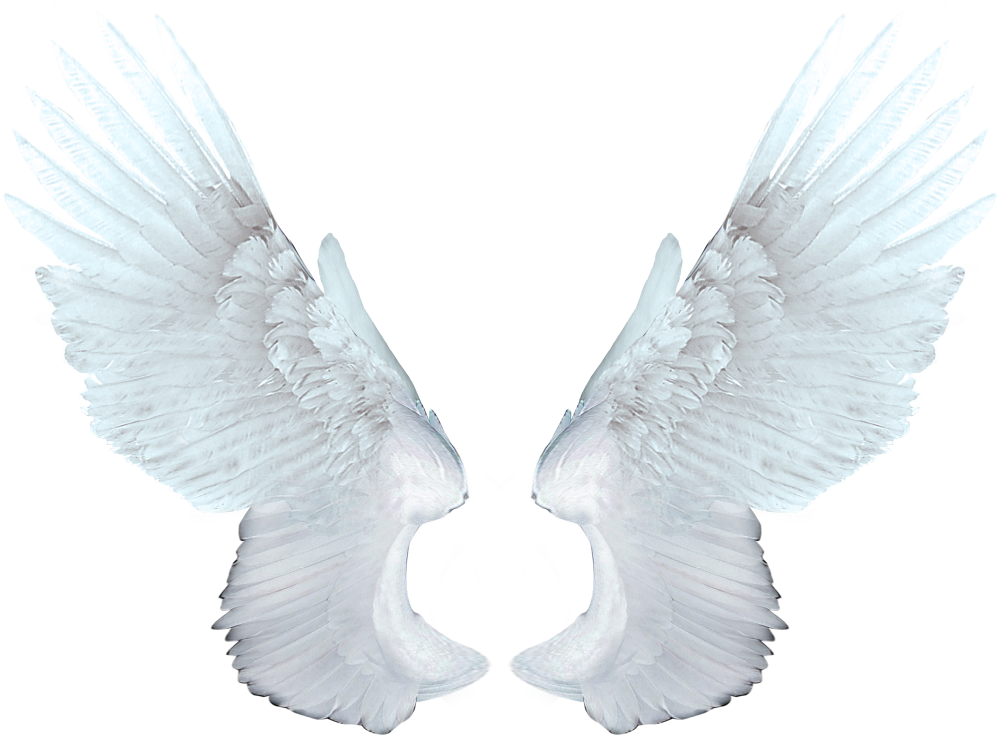 Angel wings png transparent. In web icons download
