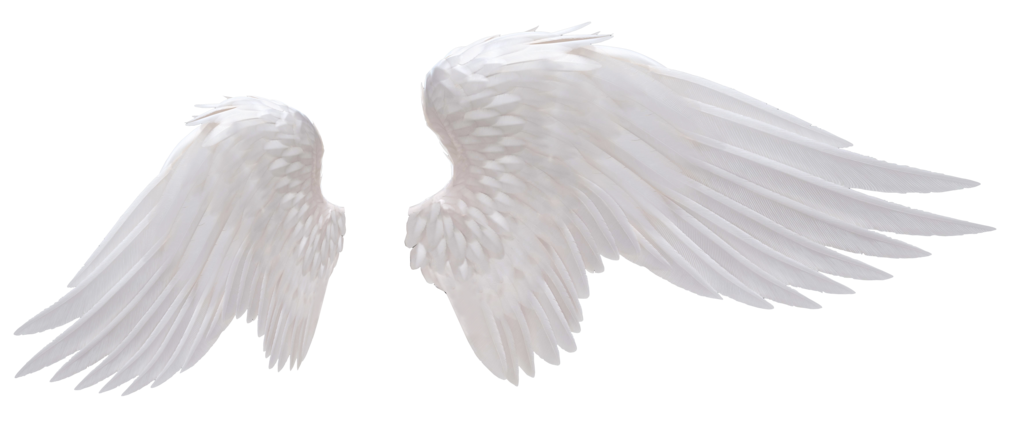 Angel wings png. White photo peoplepng com