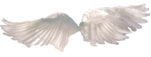 Transparent wingsmine. Angel wings png tumblr jpg transparent library