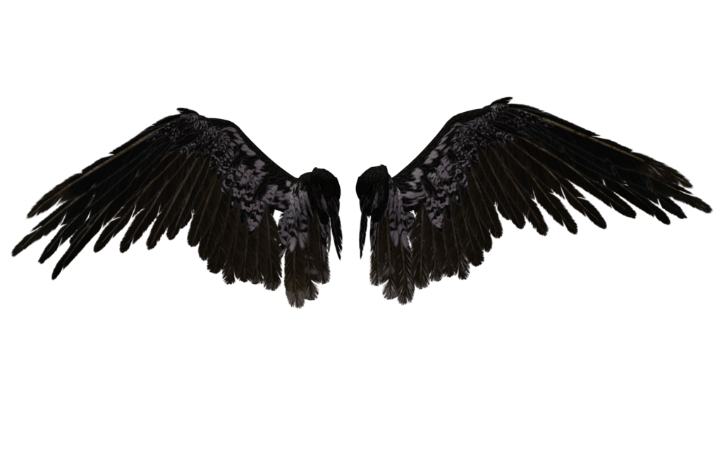 Devil wing png. Wings hd transparent images