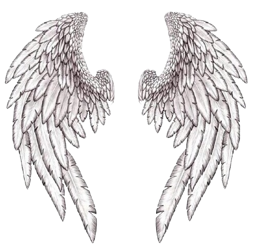 Overlay reblog transparents . Angel wings png tumblr transparent stock