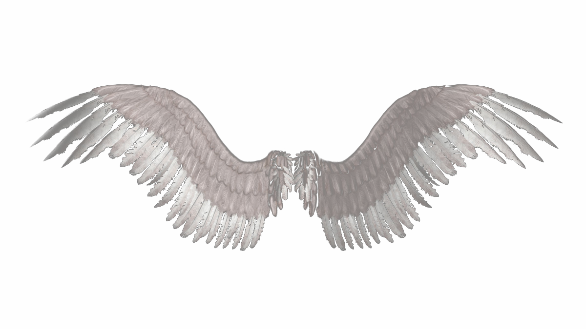 Image . Angel wings png tumblr vector free download