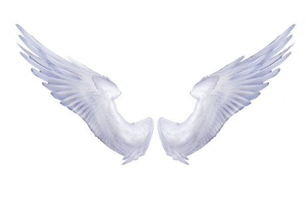 Pin by lisa gibson. Angel wings png tumblr graphic library stock