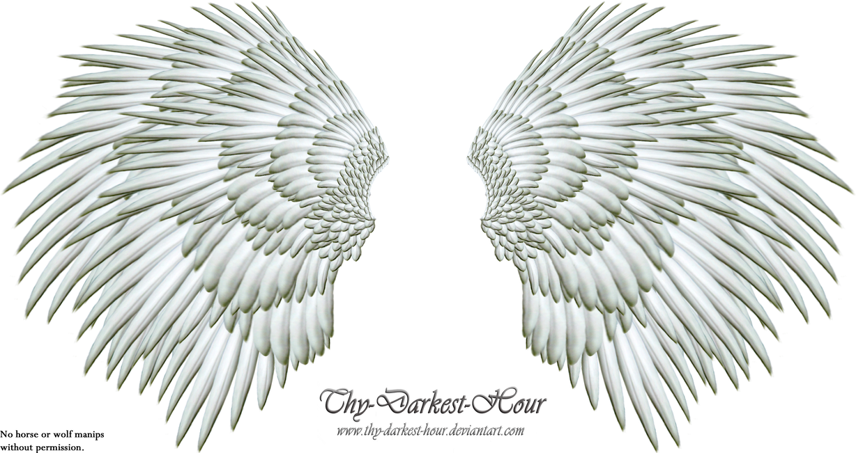 Angel wings stock png. Silver wing by thy