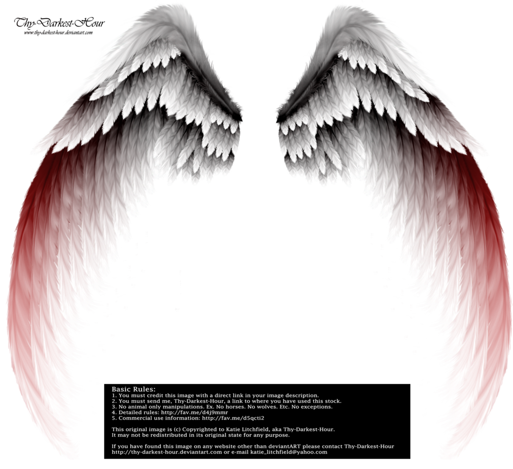 Angel wings stock png. Black by shadow of