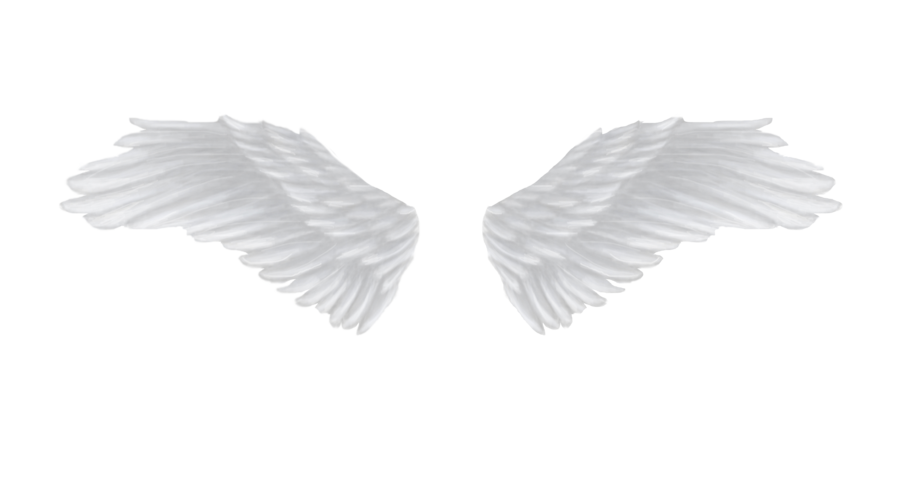 Angel wings stock png. Images free download white