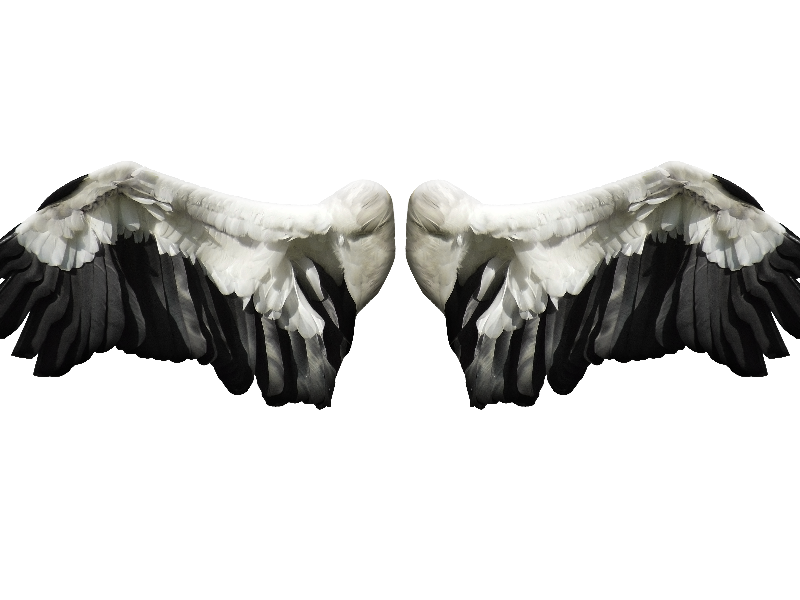 Angel wings stock png. Image free isolated objects