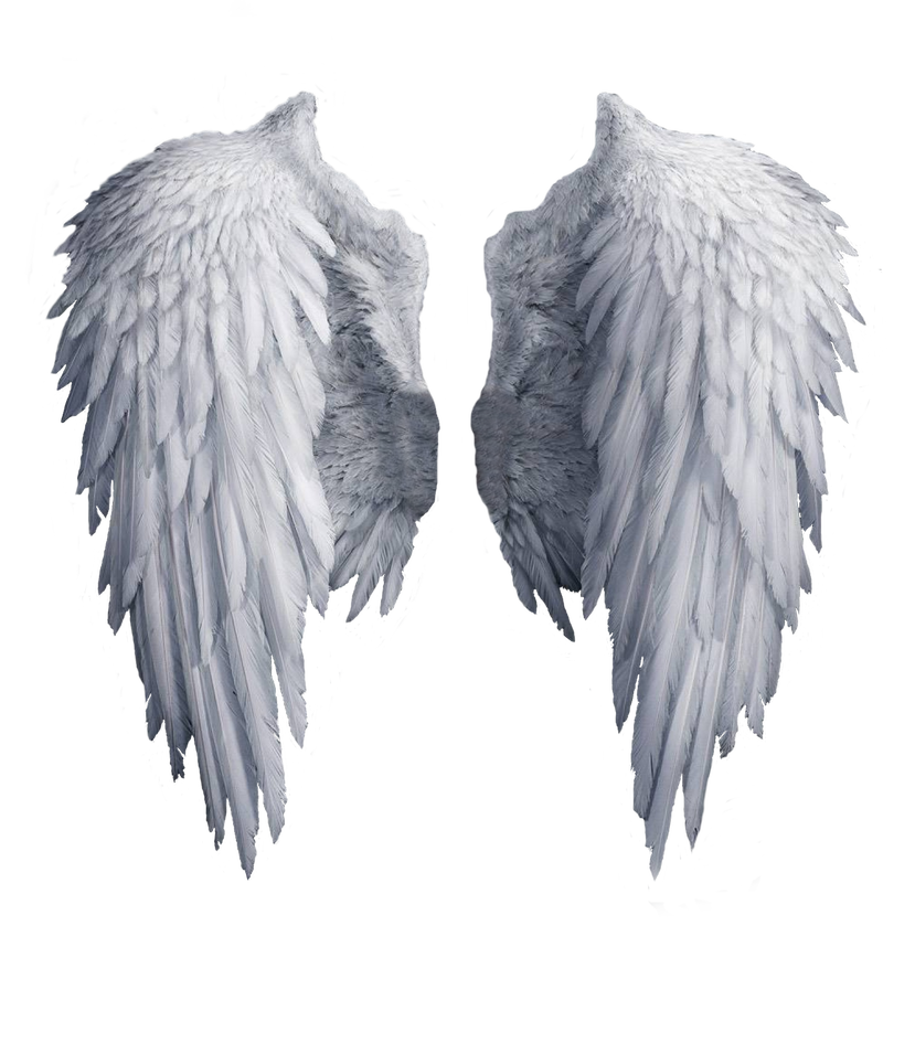Angel wings stock png. By shadow of nemo
