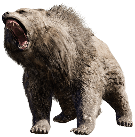Angry bear png. Free images
