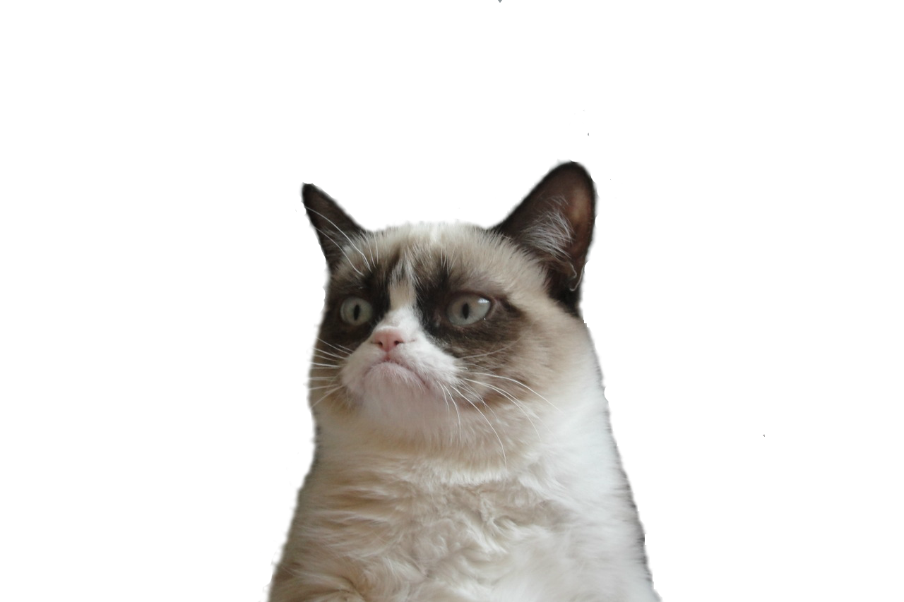 Angry cat png. Picture arts