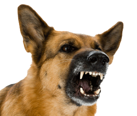 Vicious dogs png. Angry dog image