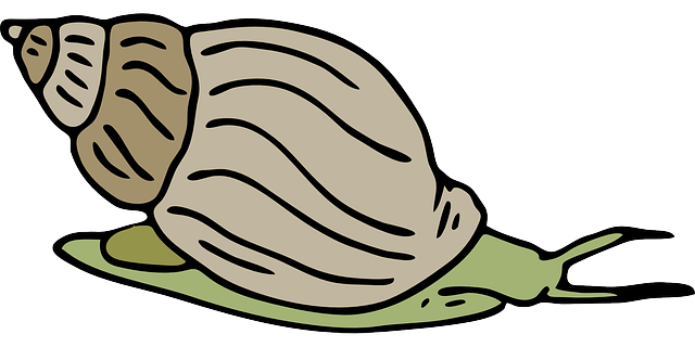 Angry snail png. Cute clip art clipart