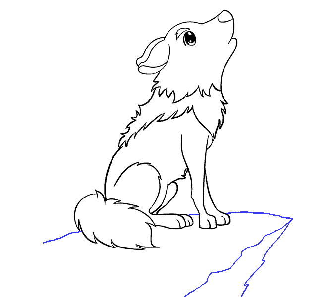 Anima drawing wolf. How to draw a