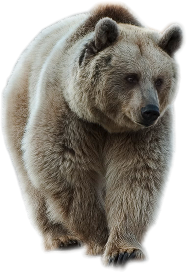Animals png for photoshop. Brown bear by lovemayu
