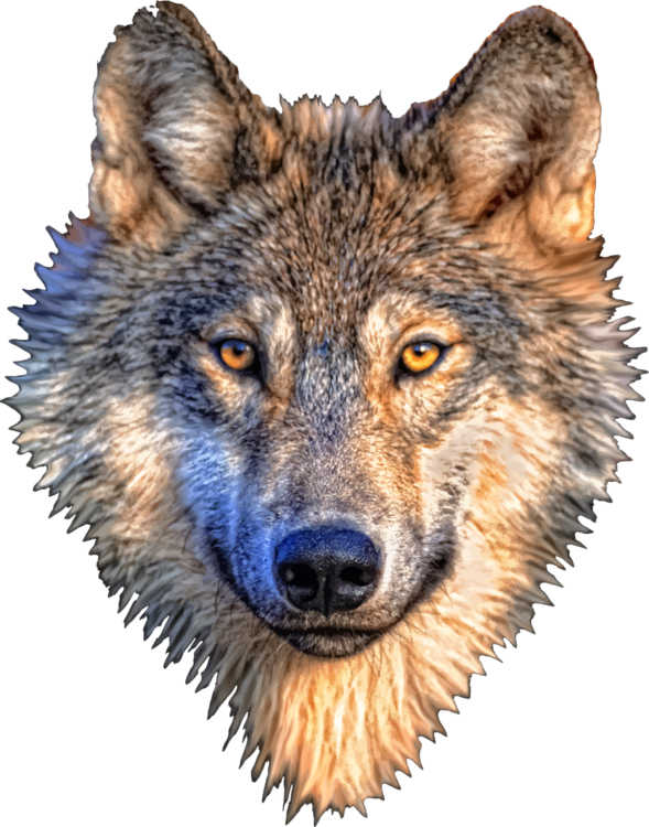 Animal head png. Gray wolf design of