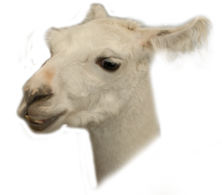 Animal head png. Stock llama by earthymoon