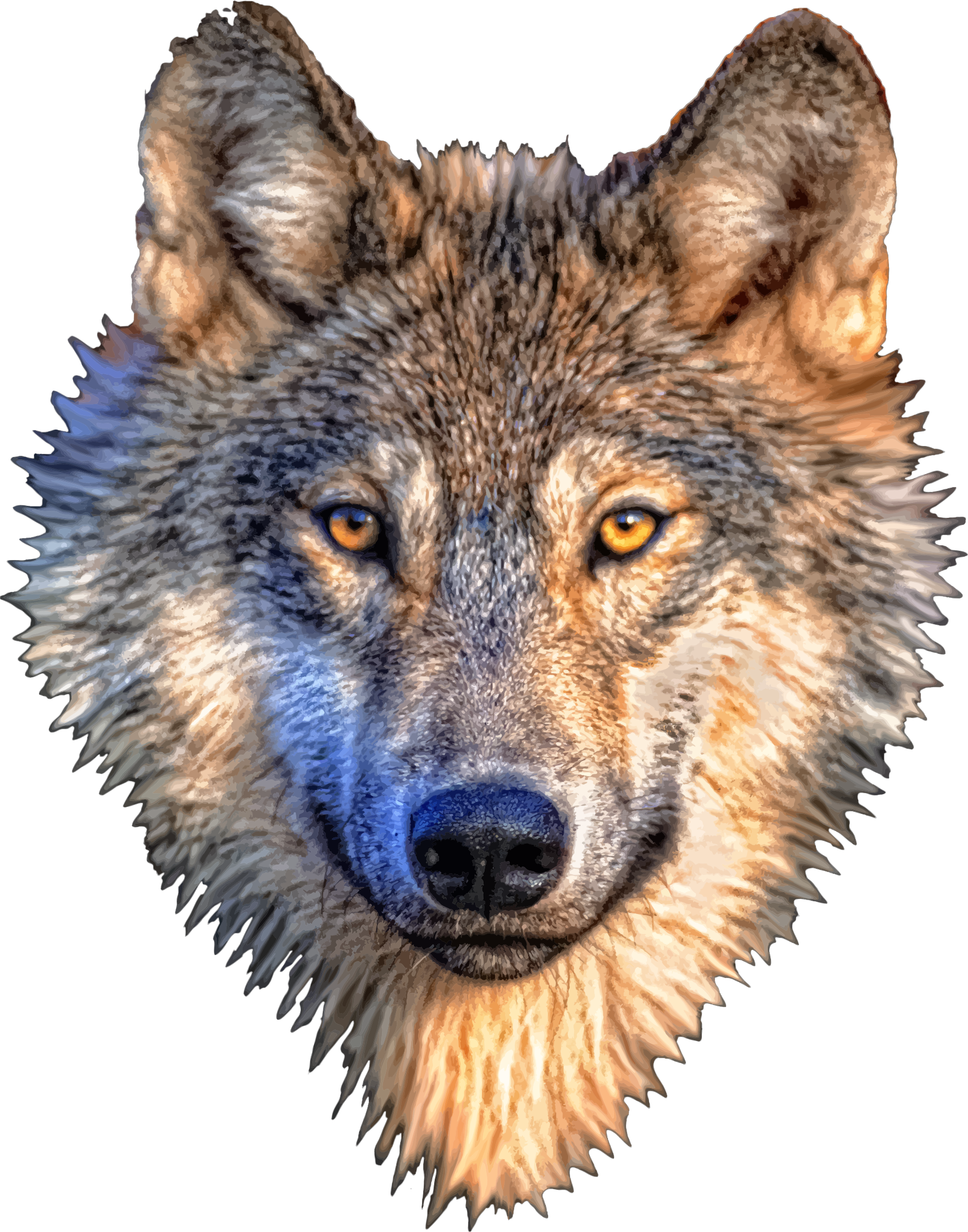 Animal head png. Wolf transparent images pluspng