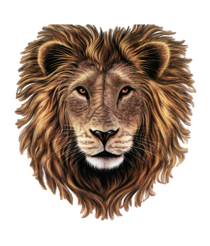 Lion face png. Image head clipart animal