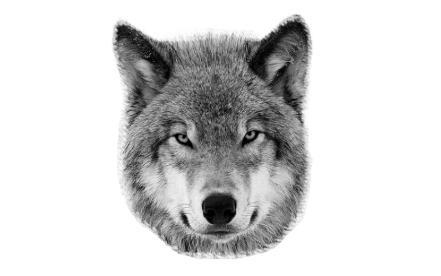 animal head png