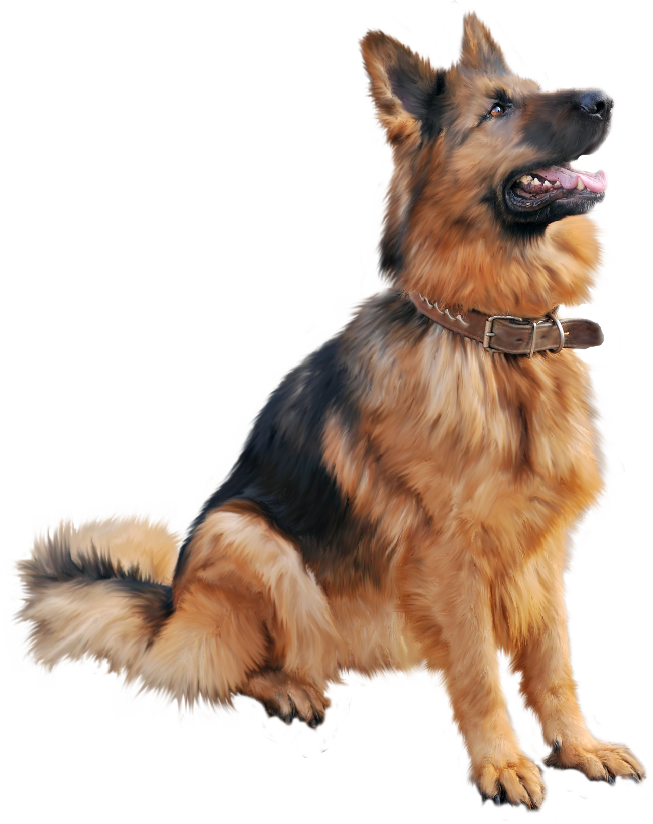 Tips and advice any. Dogs png clip free stock