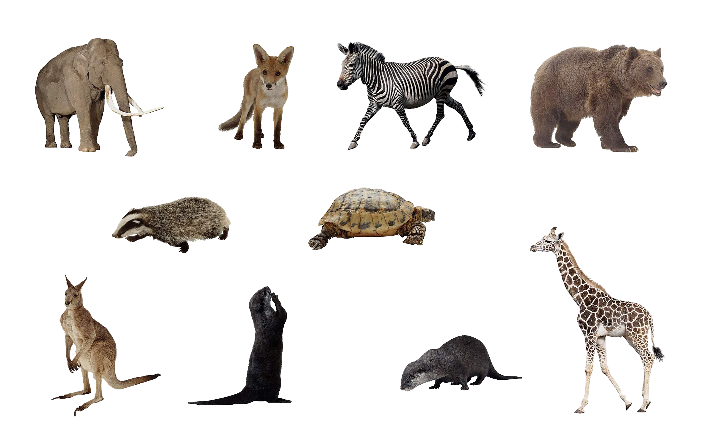 Animal png. File animals set by