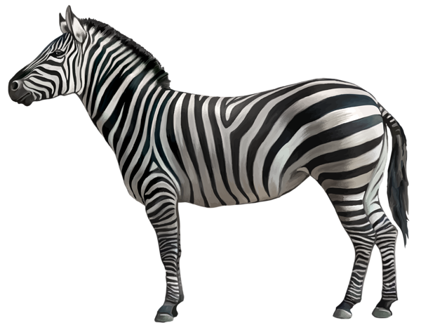 Animal png. Zebra clipart image gallery