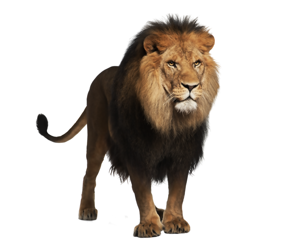 Animal png images. Image