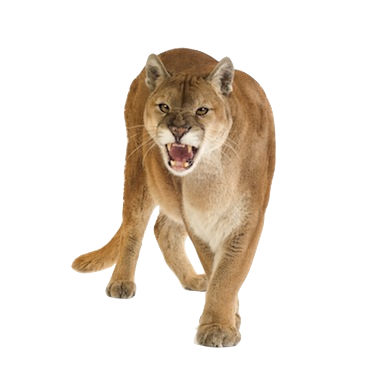 mountain lion png