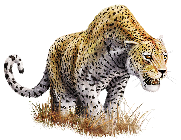 Leopard images all download. Cheetah transparent png image library download