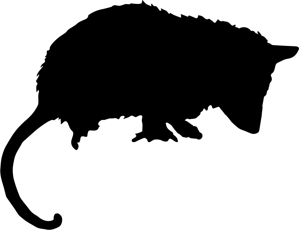 Animal silhouettes png. Opossum mammal silhouette svg