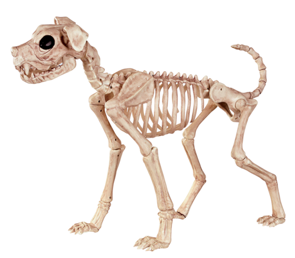 animal skeleton png