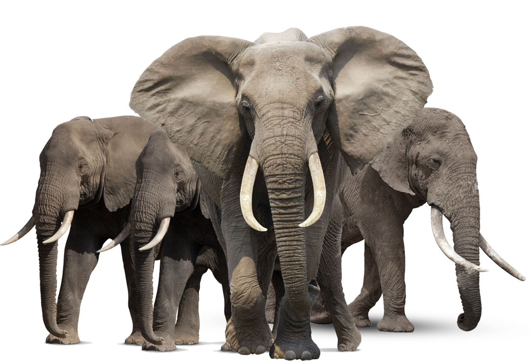 Animals .png. Elephant png hd mart