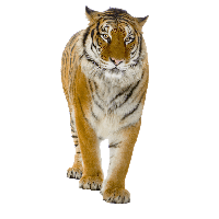 Animals .png. Download free png photo