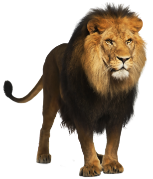 Animals .png. Tiger png clipart picture