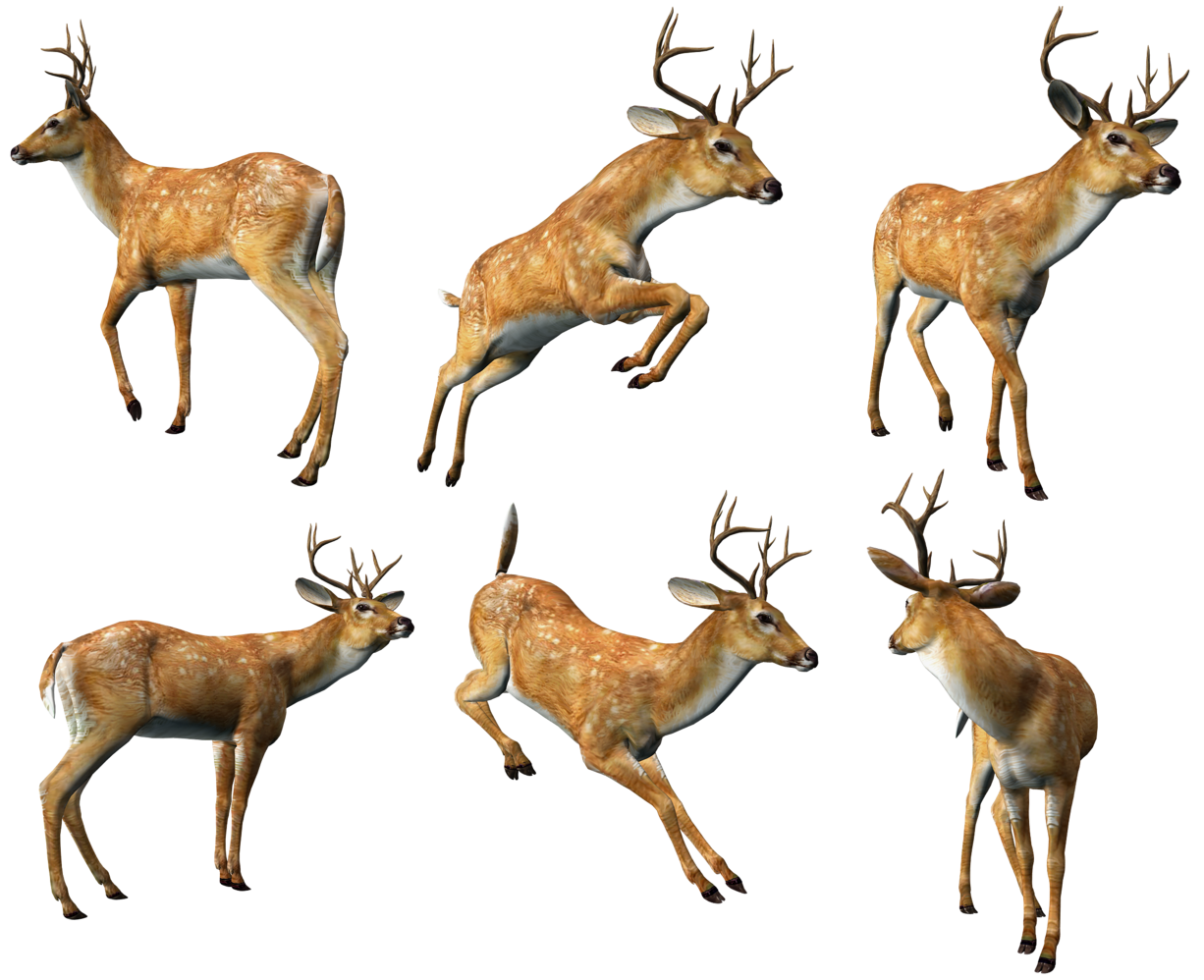 Png animal. D deers collection