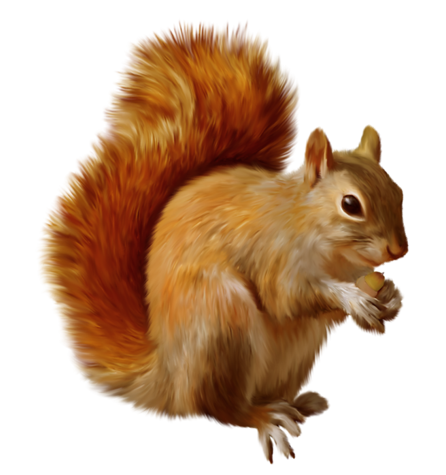 squirrel .png