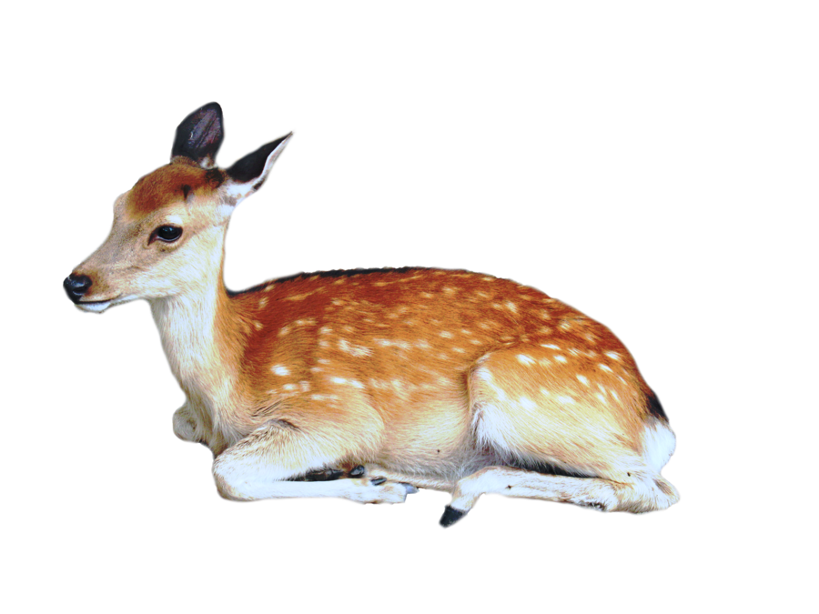 Animals png for photoshop. Precut deer by kayleero