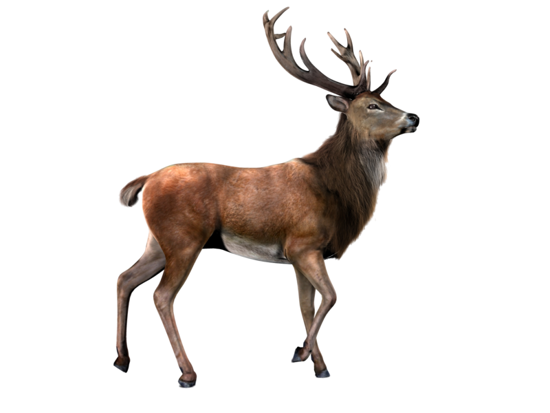 Animals png for photoshop. Deer stock by gilgamesh