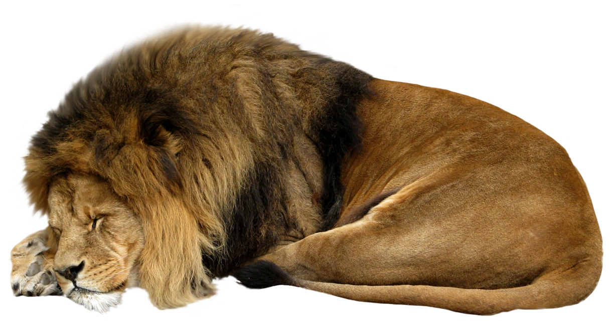 Animals png for photoshop. Lion transparent pictures free